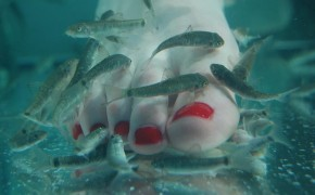 Dr. Fish Pedicure-garra-rufa